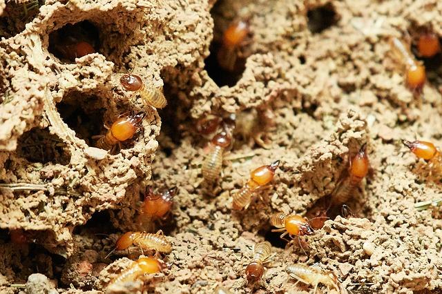Come eliminare le termiti: l'importanza della prevenzione