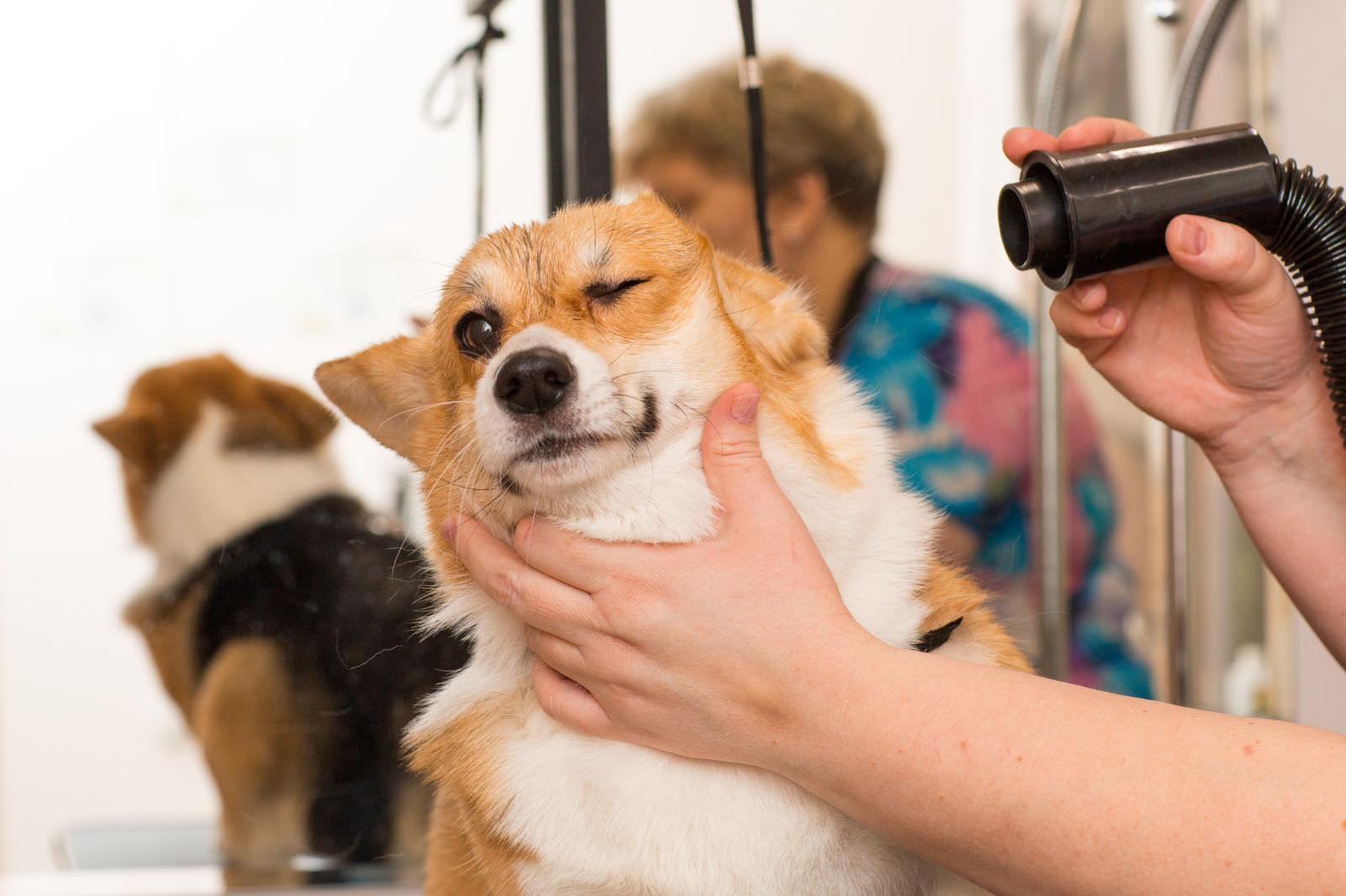 Le 3 fasi della toelettatura del cane dal cucciolo al cane anziano