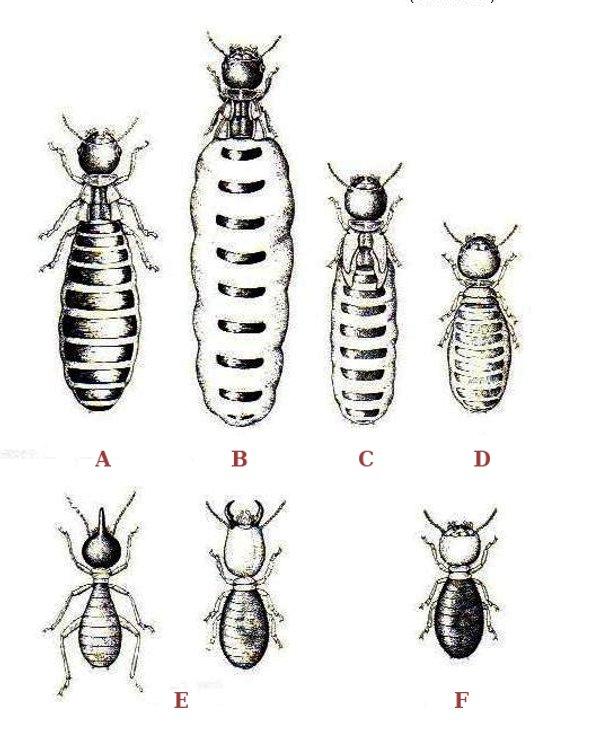 Come eliminare le termiti