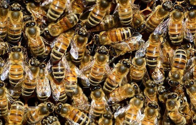 Creme al veleno d'api di Lunezia: una novità per combattere le rughe