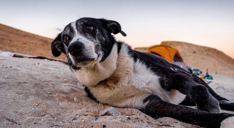 Approfondimenti sull'osteoartrite del cane